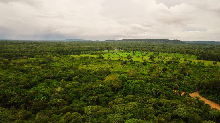 APA Jará guarda 5 mil hectares de floresta em Juruti Foto-Márcio Nagano 2.jpg